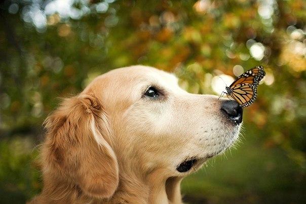 Секреты покупки витаминов для собак