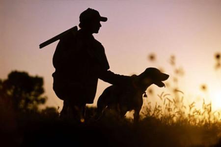 Такса и ягдтерьер – незаменимые собаки при норной охоте