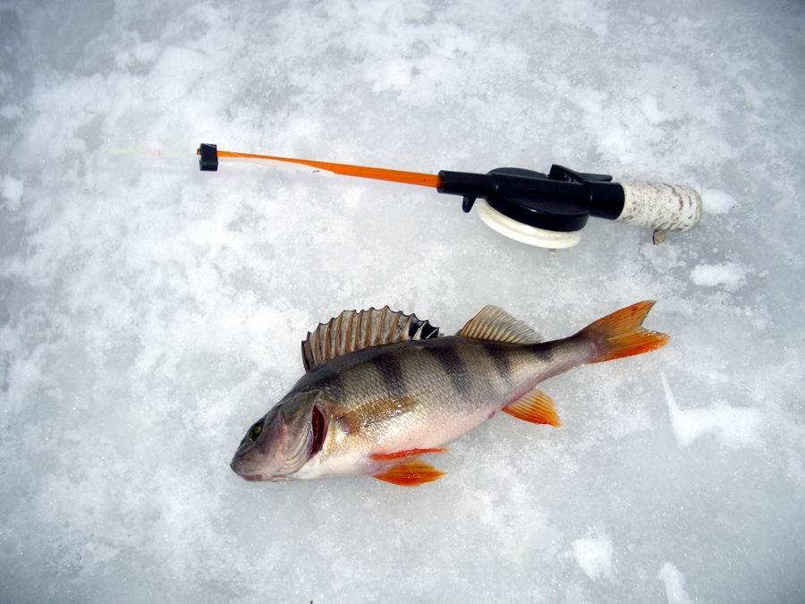Выбираем леску для зимней рыбалки